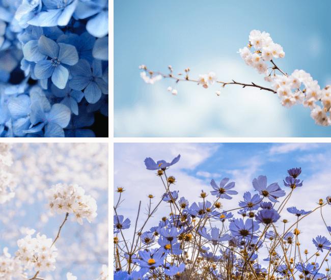 La Promenade Parfums d'ambiance pour le printemps