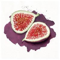 """🇫🇷 - la figue en parfumerie -   La figue est un fruit qui libère une succulente odeur. Par ailleurs, il n'est pas possible d'extraire directement une huile essentielle à partir  de cette matière première. Le parfum de la figue est ainsi reproduit en laboratoire à l'aide d'autres essences.   🌿 Le parfum de la figue apporte une odeur verte et ensoleillée à notre senteur « Sous les figuiers ».  Merci à @amanda_dilworth pour cette belle illustration 🌟  🇬🇧 - the fig in perfumery -   The fig is a fruit that releases a succulent scent. However, it is not possible to extract an essential oil directly from this raw material. The scent of the fig is therefore reproduced in the laboratory using other essences.   🌿The scent of the fig brings a green and sunny smell to our """"Under the Fig Trees"""" scent.  Thanks to @amanda_dilworth for this beautiful illustration 🌟  #fig #fragrance #perfumery #illustration #pinterest #parfuminterieur #lapromenadeparfums #madeinfrance"""