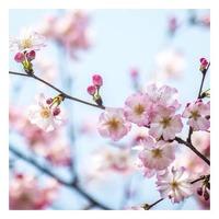 Présentation d'une famille olfactive : la Famille Fleurie 🌸  Les parfums floraux, féminité et romantisme à l'honneur✨  Certaines fragrances sont soliflores, donc orchestrées avec une seule fleur, alors que d'autres sont orchestrées avec un bouquet entier de fleurs 💐  Très utilisés, et depuis longtemps, en parfumerie, les floraux se marient élégamment avec de nombreuses autres fragrances. C'est pourquoi tous les créateurs aiment les utiliser, car avec les fleurs, leurs créations n'ont pas de fin…  Dans un jardin de Grasse vous emmène dans une promenade olfactive des plus romantiques...💫  🇺🇸 Presentation of an olfactory family: the Flower Family 🌸  Floral fragrances, femininity and romance at honneur✨  Some fragrances are solifloral, therefore orchestrated with a single flower, while others are orchestrated with a whole bouquet of flowers 💐  Widely used, and for a long time, in perfumery, the floral ones marry elegantly with many other fragrances. This is why all the creators like to use them, because with flowers, their creations have no end...  Dans un jardin de Grasse takes you on a most romantic olfactory walk...💫  #lapromenade #fleurie #flower #familleolfactive #famille #olfactory